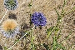 La abeja sentada abajo en la flor Imagen de archivo libre de regalías