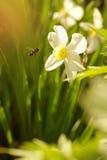 La abeja vuela a los colores Imagen de archivo