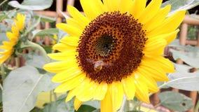 La abeja y la flor Fotografía de archivo libre de regalías