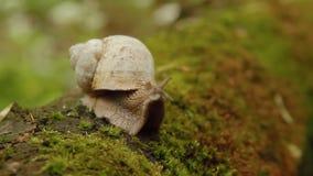 La abertura del caracol observa en bosque almacen de video