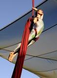 La acrobacia aérea humana Imagen de archivo libre de regalías