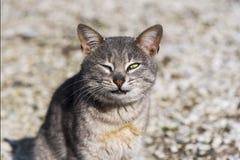 La actitud divertida de un gato callejero que mira una cámara en un jardín, al aire libre imagen de archivo libre de regalías