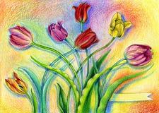 La acuarela colorida dibujó a lápiz tulipanes en fondo artístico fotos de archivo libres de regalías