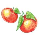 La acuarela dibujó a lápiz la fruta de la mandarina Imagenes de archivo