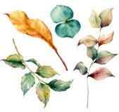 La acuarela fijó con las hojas de otoño y la rama de la hierba La hierba y el dogrose pintados a mano las hojas ramifican, del eu ilustración del vector