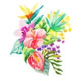 La acuarela florece el ejemplo Composición aislada Bueno para Fotos de archivo libres de regalías