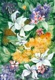 La acuarela florece el fondo Fotos de archivo