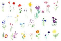 La acuarela florece el sistema de la oferta Fotografía de archivo libre de regalías