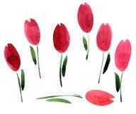 La acuarela florece tulipanes Imagen de archivo libre de regalías