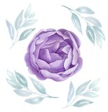 La acuarela púrpura subió Ejemplo floral botánico peonía del flor de la lila Invitación de boda Tarjetas del día de San Valentín  Imagen de archivo