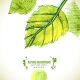 La acuarela verde sale del fondo Foto de archivo libre de regalías