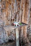 La adoración del alcohol de guarda altera en el cono grande del pino Foto de archivo libre de regalías