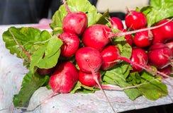 La agricultura cosechó el rábano orgánico fresco con las hojas fotografía de archivo