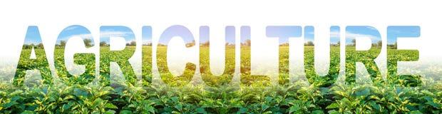 La agricultura de la palabra en el fondo de una plantación de las berenjenas El uso de soluciones integradas modernas de aumentar fotos de archivo