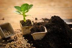 La agricultura, planta, semilla, almácigo, planta que crece en el papel recicla p foto de archivo
