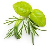 La albahaca se va, hierba del eneldo, especia del romero. imagen de archivo libre de regalías