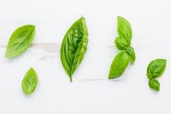 La albahaca verde dulce fresca se va en el backgroun de madera lamentable blanco Imagen de archivo