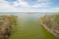 La Albufera, Valencia Royalty Free Stock Images