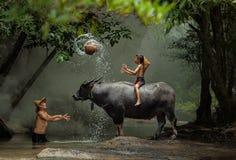 La alegría de niños con el búfalo en el río imagenes de archivo