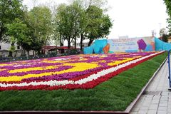La alfombra más grande de tulipanes el mundo en Sultanahmet, Estambul Fotografía de archivo