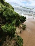 La alga marina cubrió la roca Imagenes de archivo
