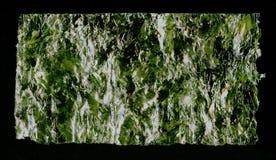 La alga marina de la hoja de Nori secó imagen de la textura del fondo de la alga marina Imagen de archivo