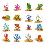 La alga marina marina de las algas verdes, planta el submarino, aislado en el fondo blanco, vector, estilo de la historieta ilustración del vector