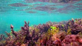 La alga marina escalona de las ondas debajo del agua almacen de metraje de vídeo
