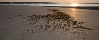 La alga marina se fue detrás durante marea baja en el área del norte de la playa de la isla de Seabrook Foto de archivo libre de regalías