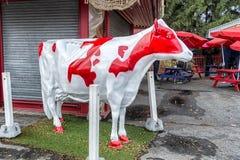 La alimento rosso e bianco di Ronde della mucca Fotografia Stock