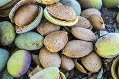 La almendra sensacional con la piedra, almendras de colada, comiendo las almendras es buena para la salud, almendras naturales, s Imágenes de archivo libres de regalías