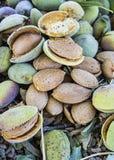 La almendra sensacional con la piedra, almendras de colada, comiendo las almendras es buena para la salud, almendras naturales, s Imagenes de archivo