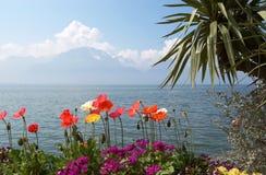 La amapola brillante florece en el fondo del lago Lemán Fotografía de archivo