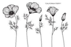 La amapola de California florece el dibujo y el bosquejo ilustración del vector