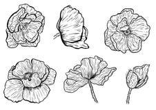 La amapola florece la mano dibujada Puede ser utilizado en propósito del diseño ejemplo, vector - acción Imágenes de archivo libres de regalías