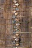 La amapola seca de los tallos dirige en un paralelo dispuesto del tablero de madera Foto de archivo libre de regalías