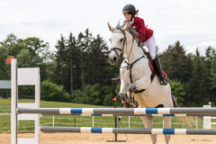 La amazona en chaqueta roja está saltando en un caballo blanco Imágenes de archivo libres de regalías
