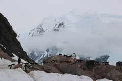 La Antártida - pingüinos Fotografía de archivo