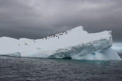 La Antártida - pingüinos Fotos de archivo libres de regalías