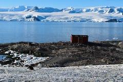 La Antártida un paisaje asombroso con un refugio de madera para el explorador y algunos pingüinos del gentu imágenes de archivo libres de regalías