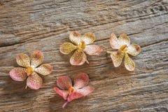 La apariencia vintage de la orquídea hermosa florece en fondo de madera oxidado Foto de archivo