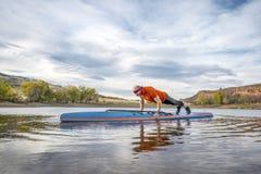 La aptitud encendido se levanta paddleboard Imágenes de archivo libres de regalías