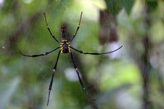 La araña Imagen de archivo libre de regalías