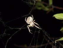 La araña Foto de archivo