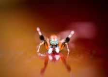 La araña fotografía de archivo libre de regalías