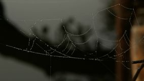 La araña cae mañana metrajes