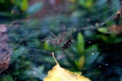 La araña come el saltamontes Imagenes de archivo