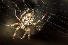 La araña del cazador Foto de archivo libre de regalías