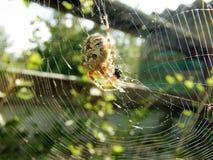 La araña desayuna en el web Fotografía de archivo libre de regalías