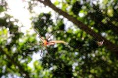 La araña en el jardín Foto de archivo